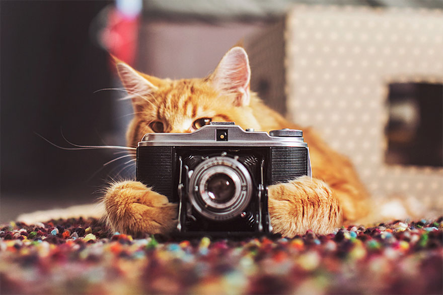 ginger-cat-photography-kotleta-cutlet-kristina-makeeva-hobopeeba-1