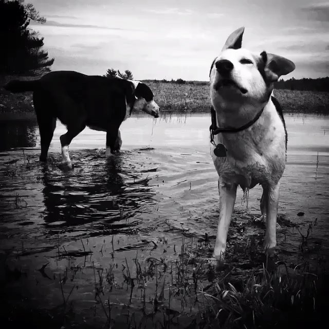 dogs on water