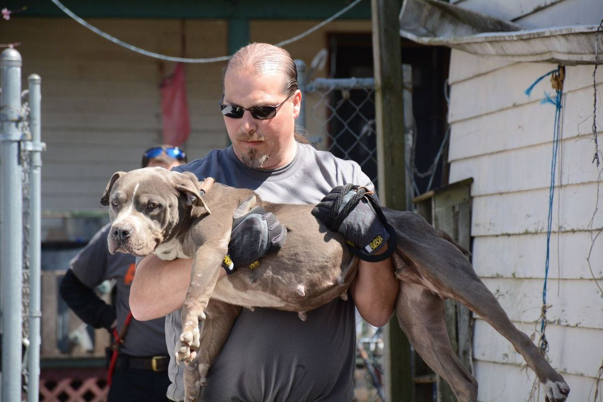 Fighting dog being rescued