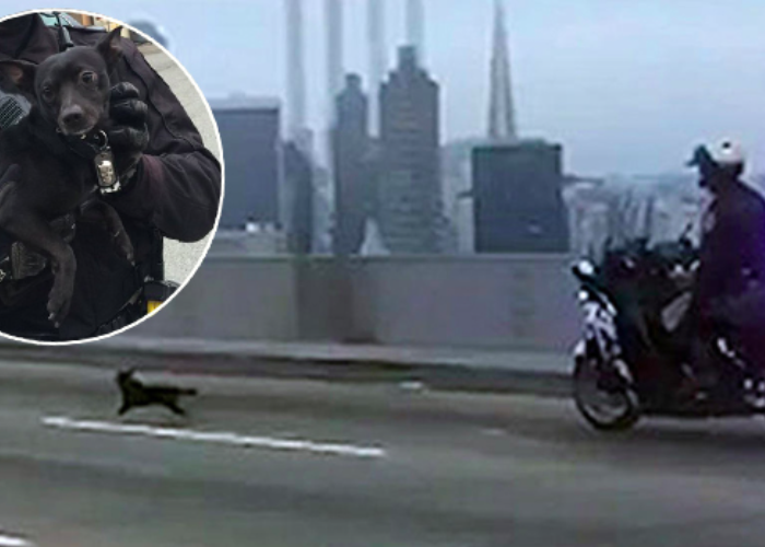 Making The World A Better Place Watch Dogs