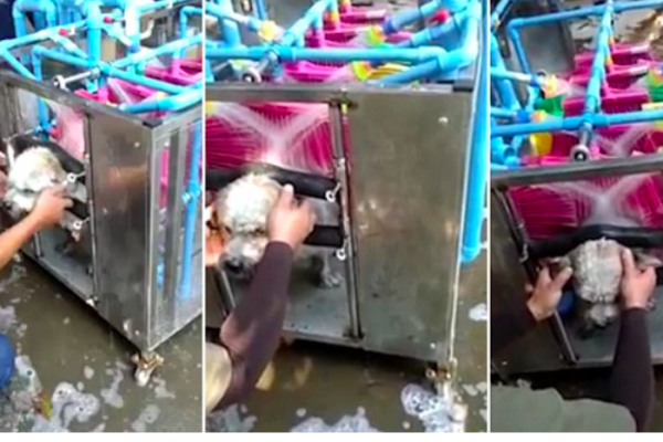 Automated dog washing machine