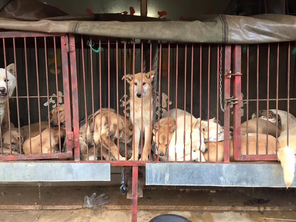 Rescue dogs in a van
