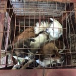 Dogs rescued from meat trade in Asia