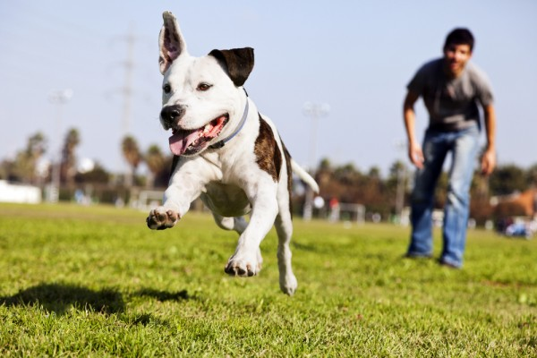 dog-and-owner-catching-ball