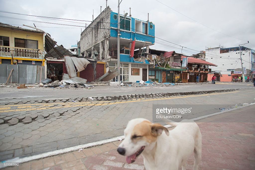 A dog runs by the debris in Ecuador.