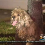 34 dogs rescued from house fire