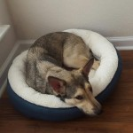 juno in small bed