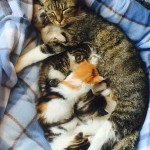 Puppy adopted by cat