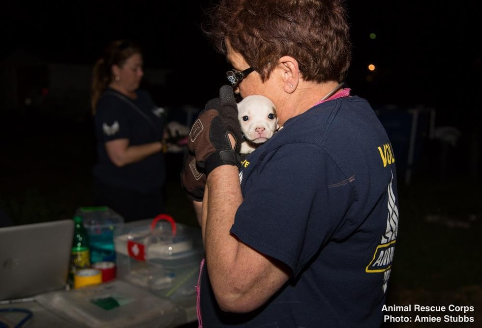 Animal Rescue Corps with Chihuahua