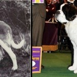 Dog breeding then and now.