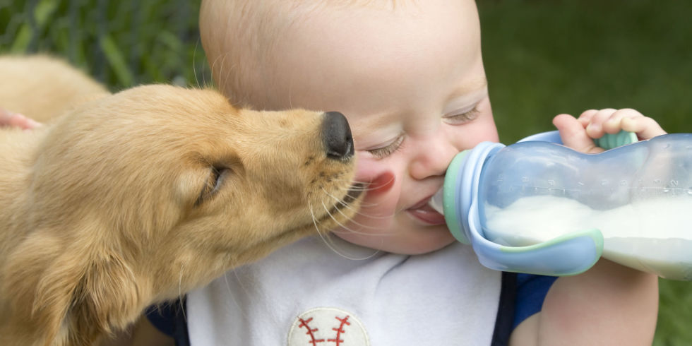 Puppy Licking Feeding Baby | 3MillionDogs