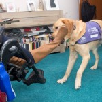 Assistance dog takes off shoes