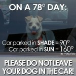 Dogs in hot cars