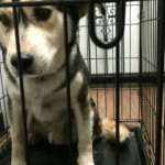 Owen County dogs rescued from rat home
