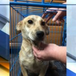 Dogs rescued from rat infested home