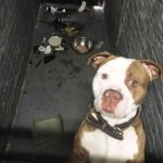 Dog abandoned in basement apartment