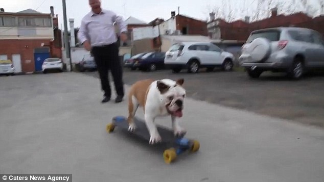 Tommy skateboarding Bulldog