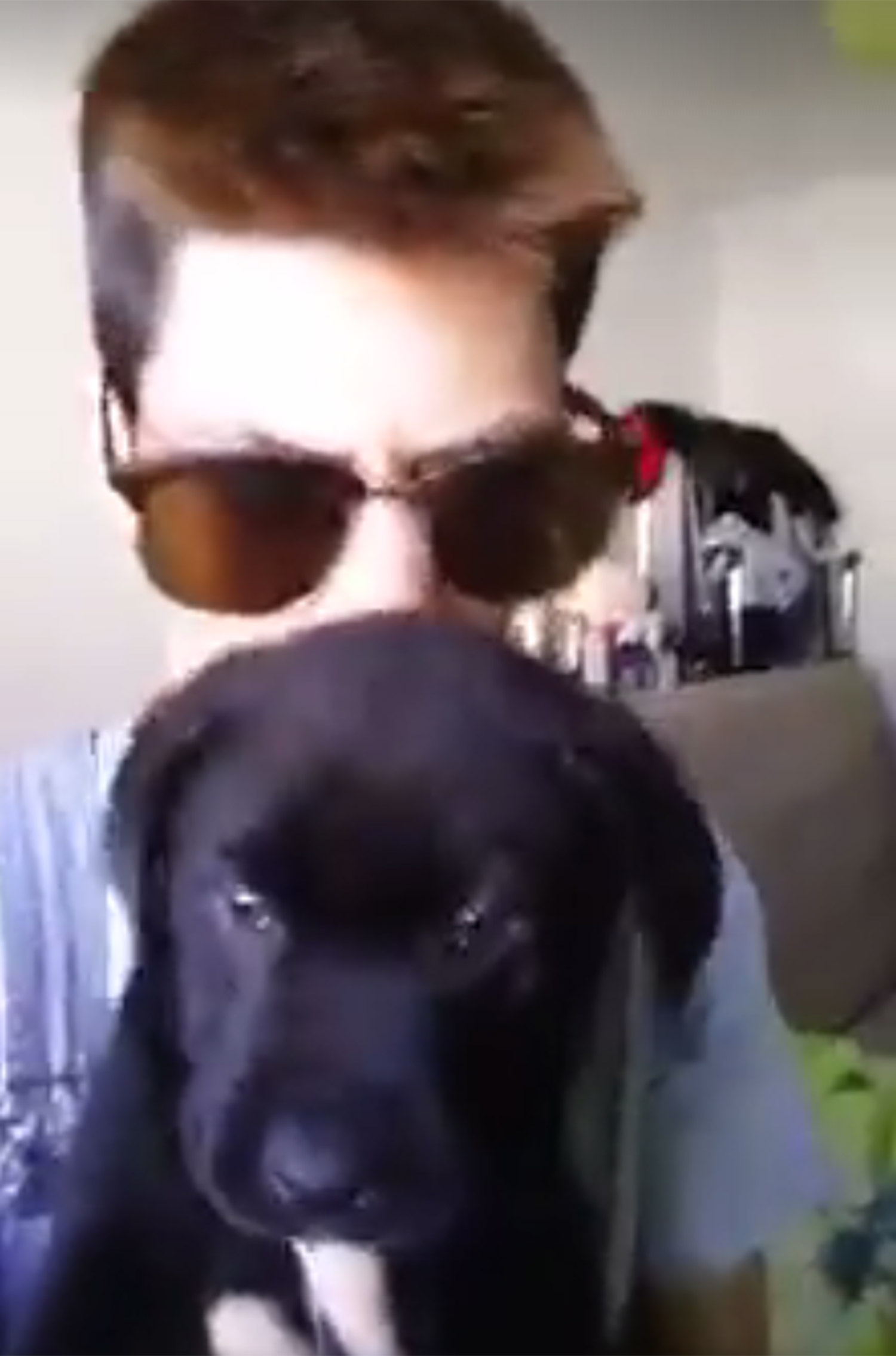 Thug abuses puppy Portugal