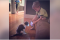 Boy teaches dog through Youtube video