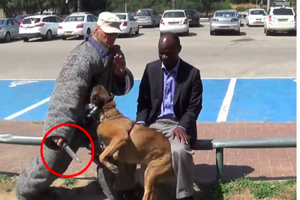 Belgian Malinois dog protects owner from knife demonstration
