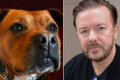 Ricky Gervais Dog Fighting