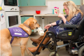 Assistance Dog Gino Canine Partners