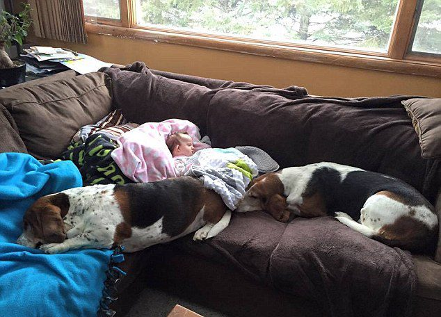 Basset Hounds and Nora