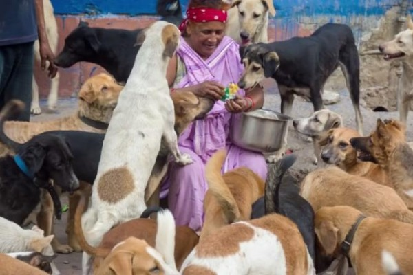 Pratima Devi taking care of stray dogs