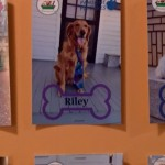 Riley wearing a tie at daycare