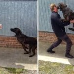 dog reunion with his handler