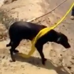 Indian man rescued dog with turban