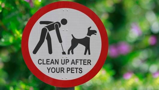 Pick up after dogs sign