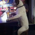 Dogs act like humans