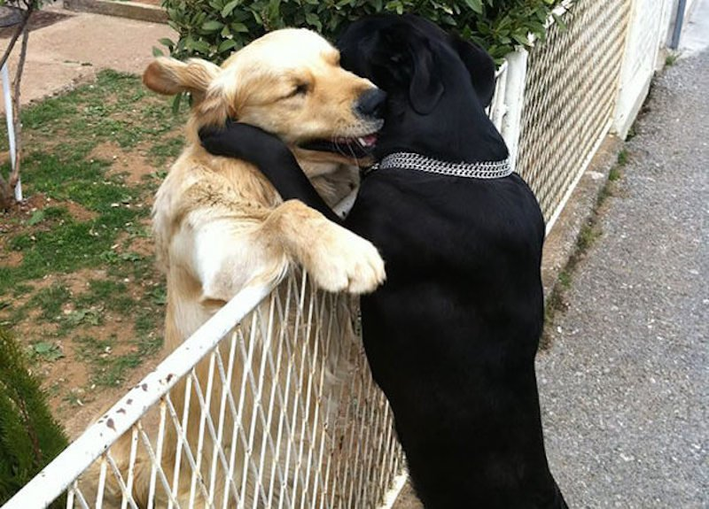 Dog best friends