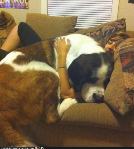 Large dogs small spaces