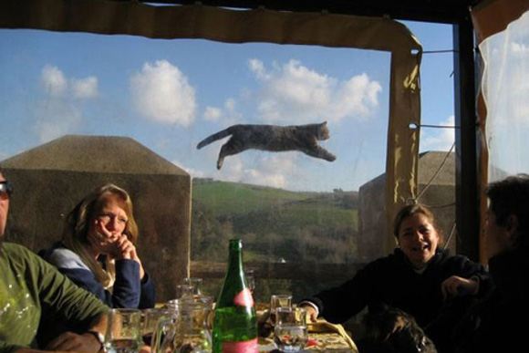 Cat photobomb