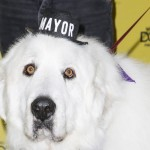 Duke the mayor