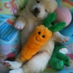Puppies stuffed toys