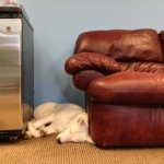 Animals at the office