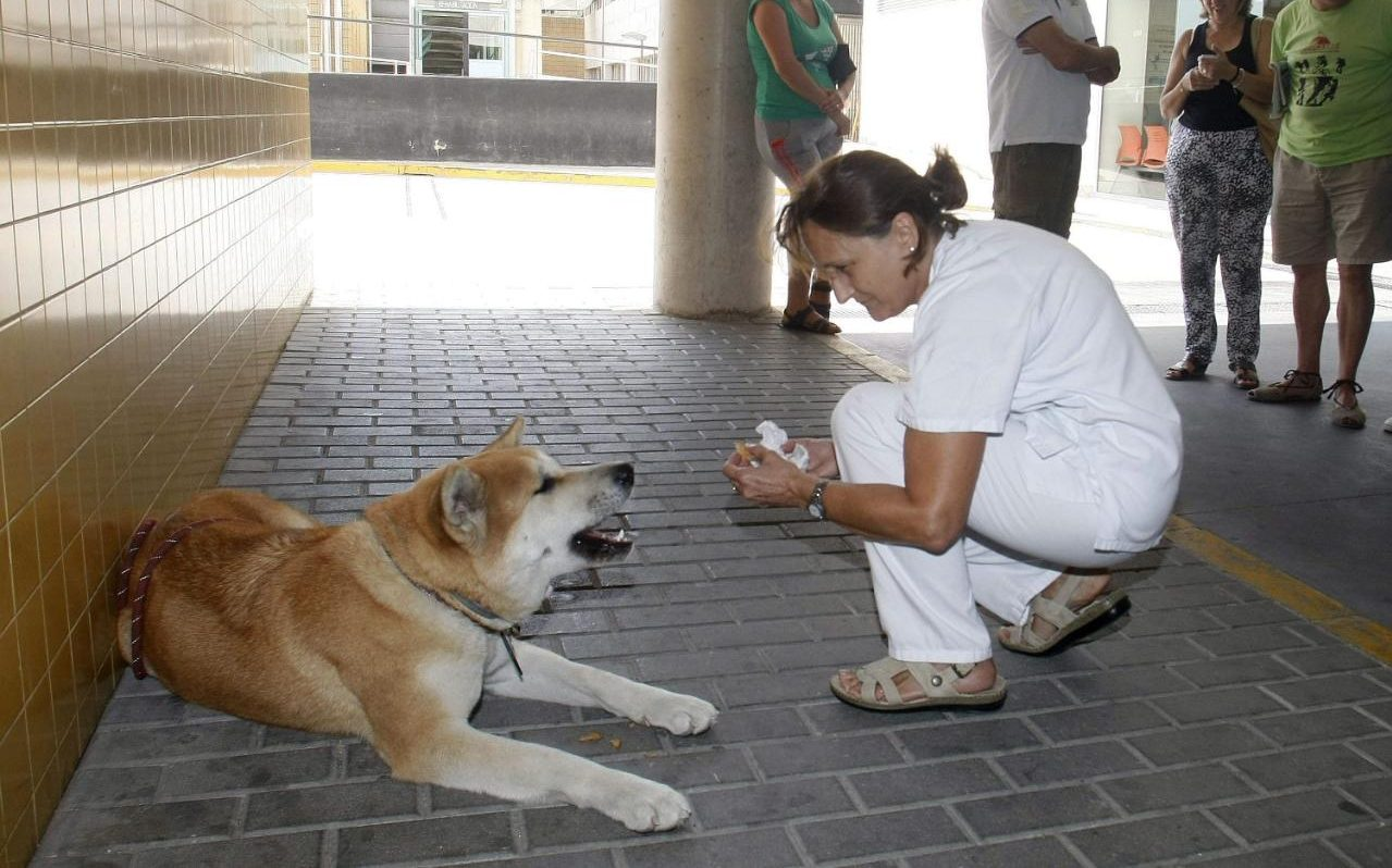Dog outside hospital