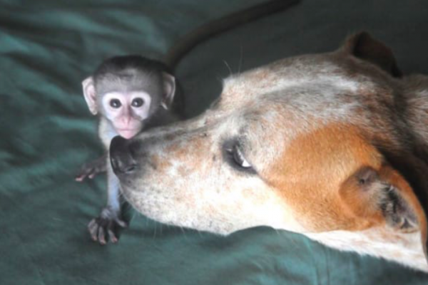 Dog orphan Chimpanzees