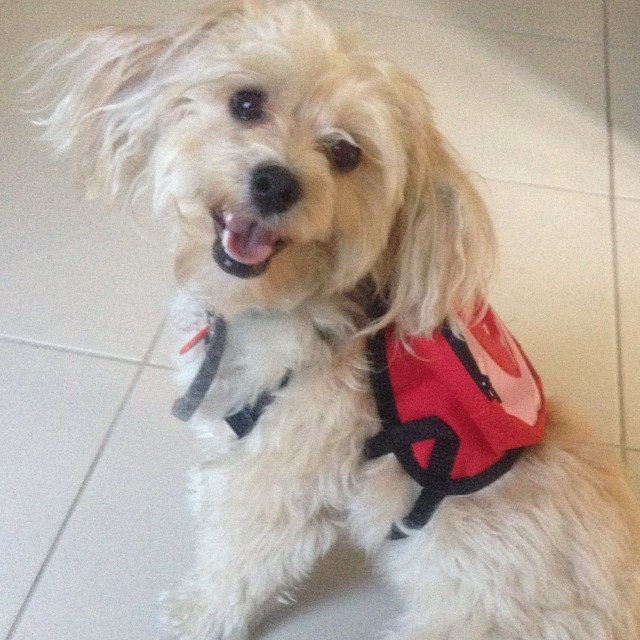 Dogs back to school