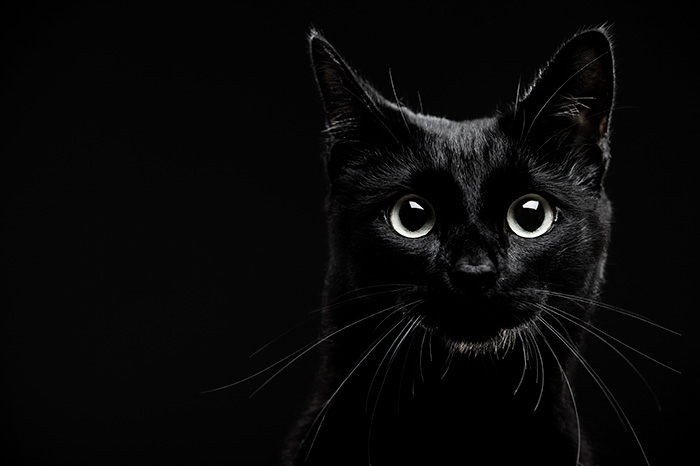 10 Superstitions Involving Black Cats And Good Luck 3 Million Dogs