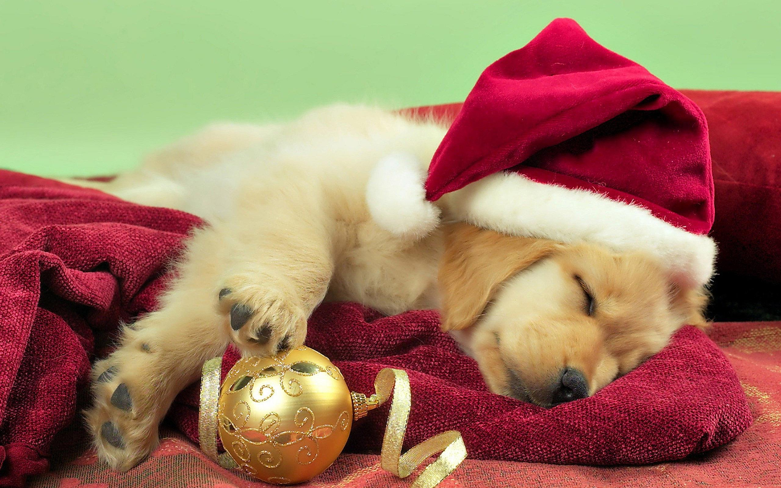 desktop-pictures-of-christmas-dogs-wallpaper