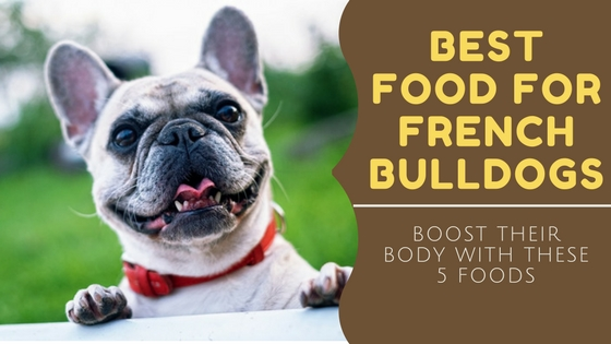 best food for french bulldog 3milliondogs making the world a better place for dogs 4947