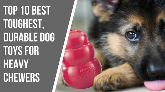 Best Indestructible Dog Toys For Heavy Chewers