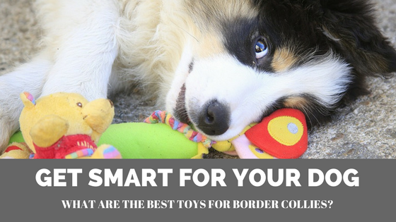 Top Picks For The Best Toys For Border Collies