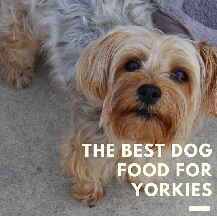Choosing The Best Dog Food For Yorkies Top Picks Of 2018