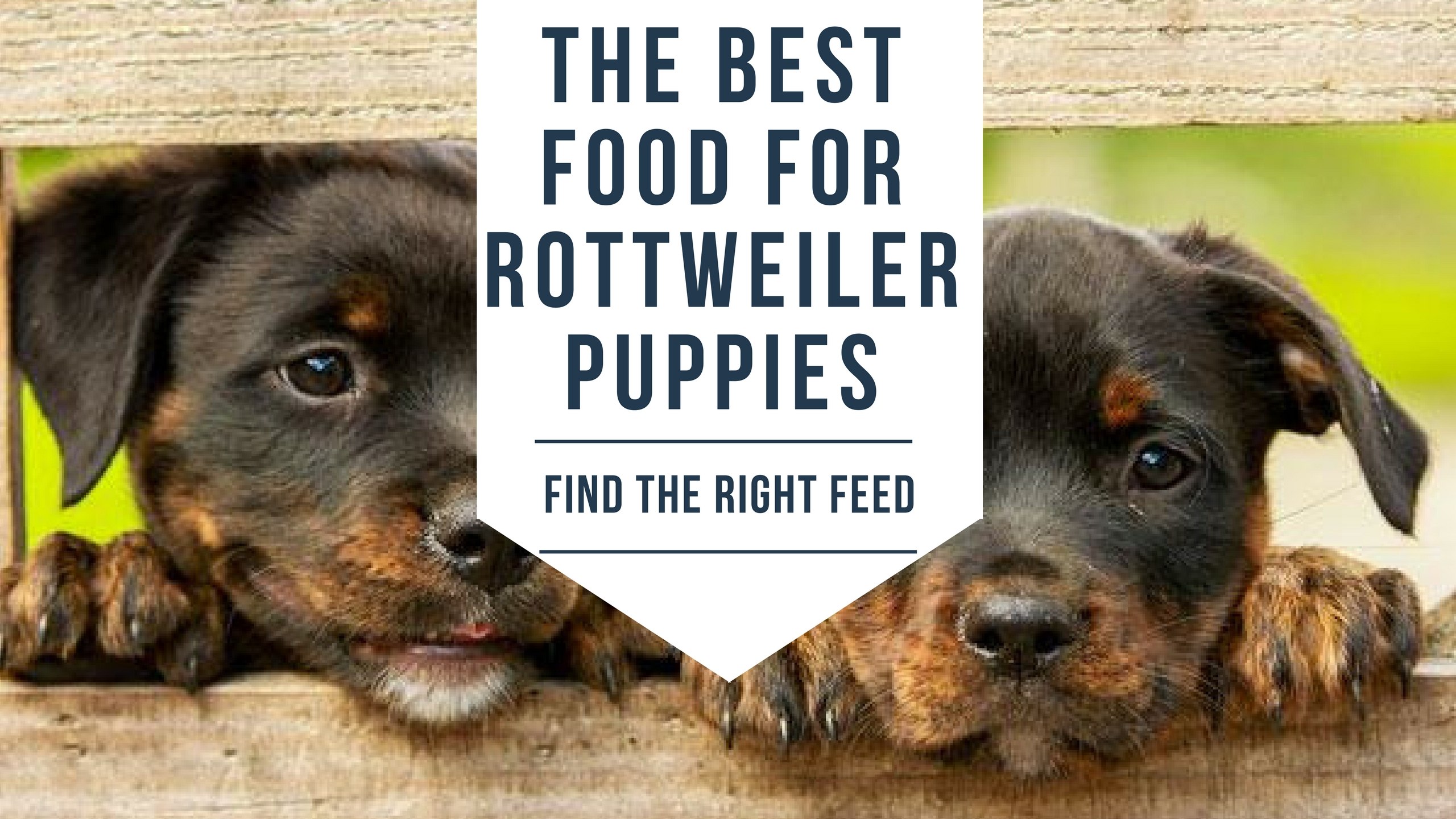 The Best Food For Rottweiler Puppies Find The Right Feed